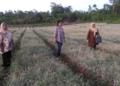 Lahan Pengembangan Bawang Merah Di Kabupaten Maluku Tenggara