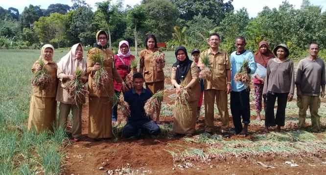 Kadis Pertanian Promal, Ir. Diana Padang, M.Si Bersama Staf, Panen Bawang Merah di Dusun Oli Lama.