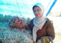 Ir. Tia Amma, Kepala Bidang Hortikultura Dinas Pertanian Provinsi Maluku.