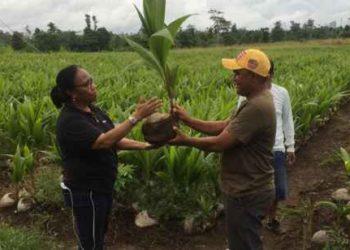 Ibu Ola Maitimu Serahkan Bibit Anakan Kelapa kepada Petani di MTB.