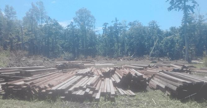 Sebagian dari 150 kubik kayu yang berhasil diamankan Tim Gakum Dishut Provinsi Maluku pada Desember 2018 lalu
